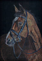 Horse in the dark by DrawingNynke