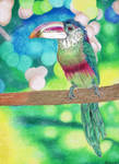 Colorful by DrawingNynke