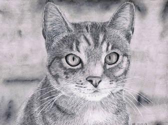 Cat portrait by DrawingNynke