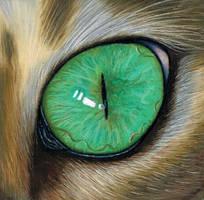 Cat eye study