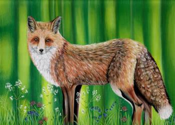 Fox by DrawingNynke