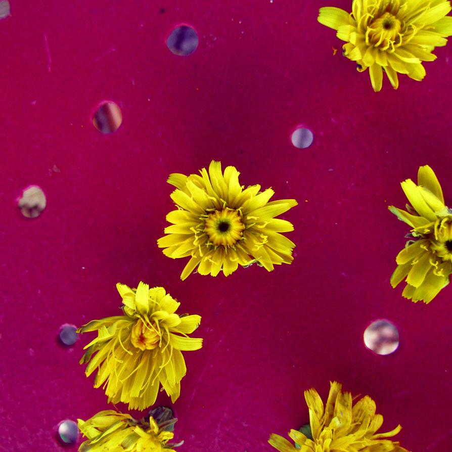 des fleurs sur la table du jardin by chiarachiarel on deviantart. Black Bedroom Furniture Sets. Home Design Ideas