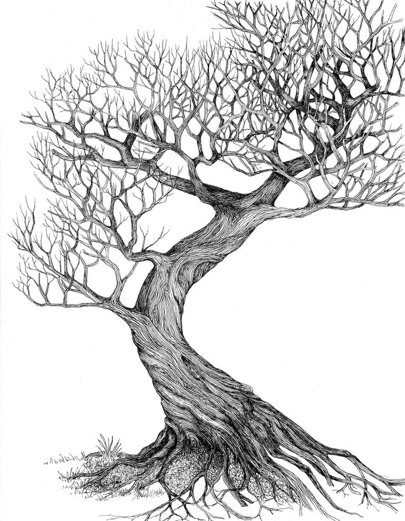Line Art Of Trees : Twisting tree by ellfi on deviantart