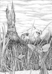 Dragonfly pond