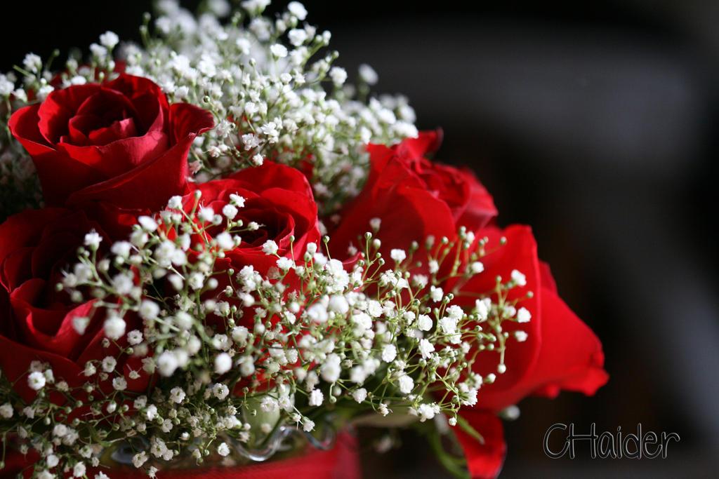 CVECE - Page 5 Roses_by_chantal7-d46yo9j