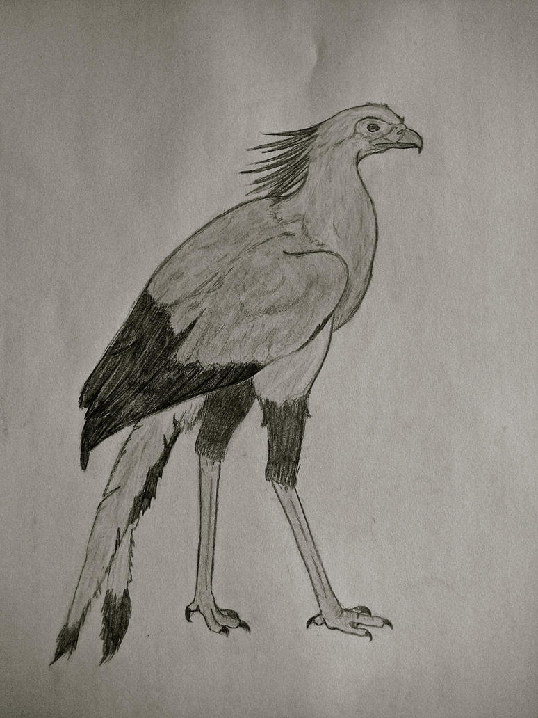 Secretary Bird by Kaniai