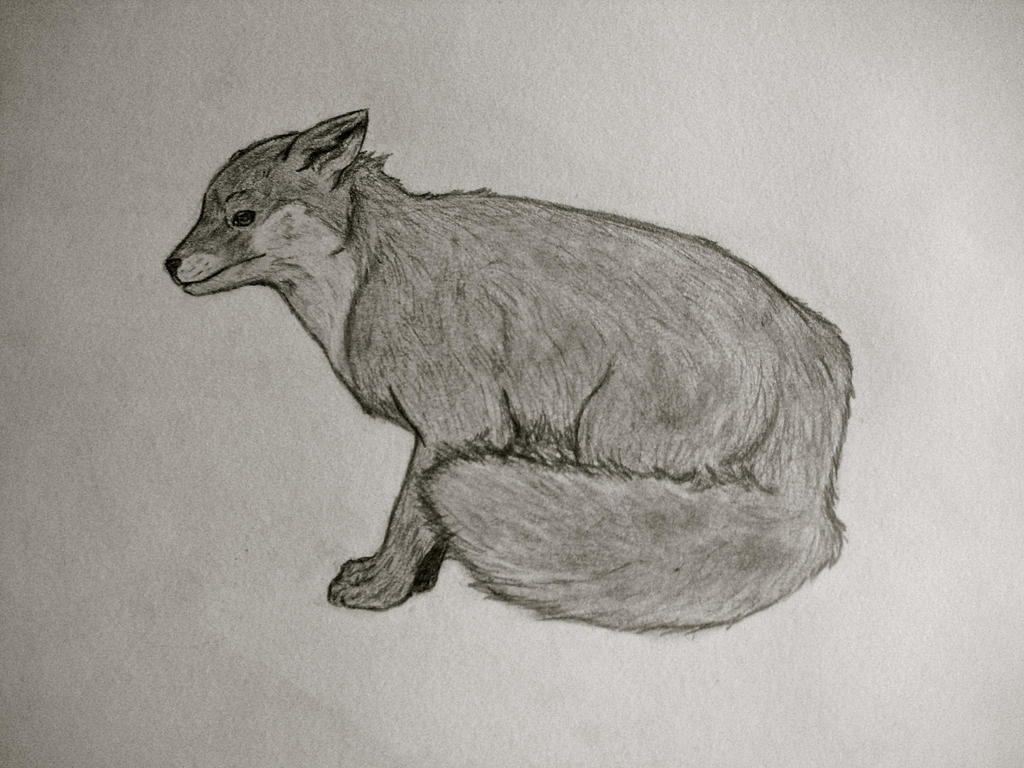 Red Fox by Kaniai