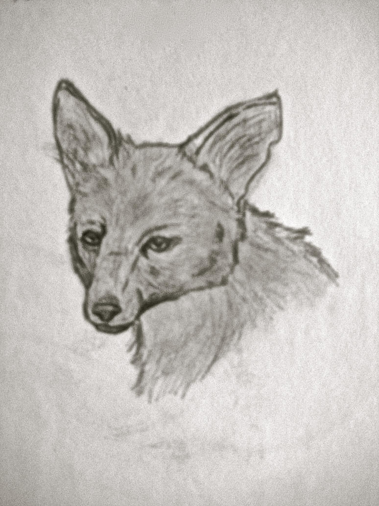 Maned Wolf (head) by Kaniai