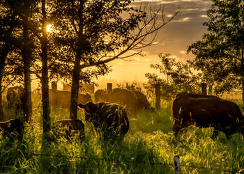 Lazy evening grazing by RobertKohler