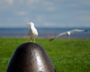 Summer Gulls by RobertKohler