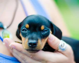 Little Puppy by RobertKohler
