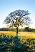 Oak Twinkle by BuuckPhotography