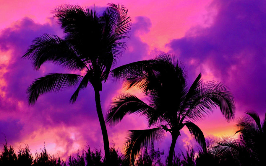 Pink Palms by BuuckPhotography