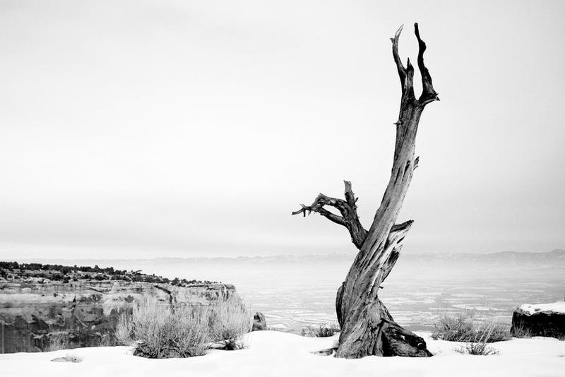 Solitude (Black and White)