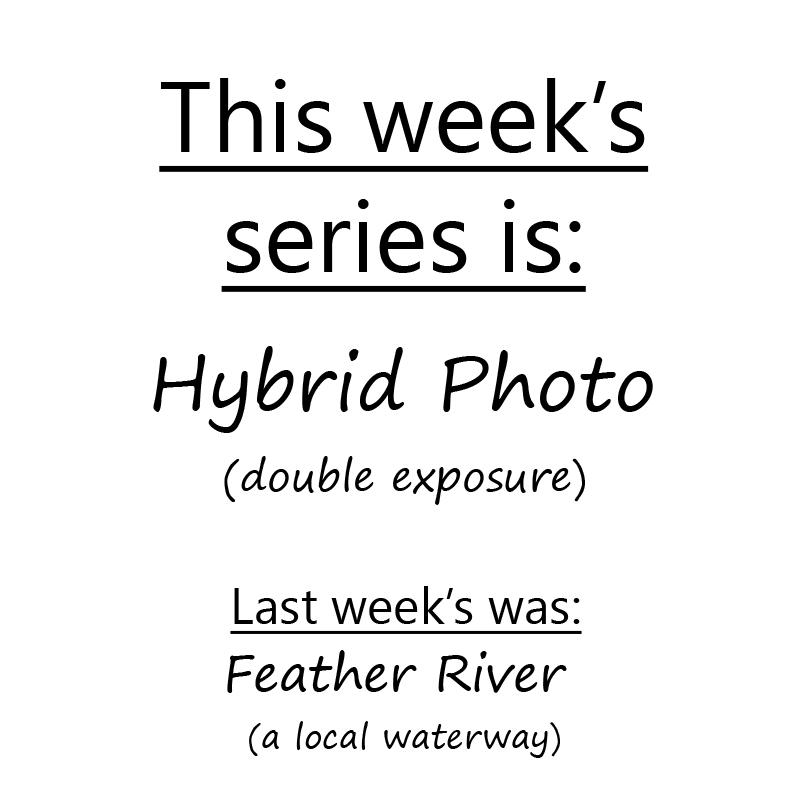 Day 831  Hyrbid Photo Theme by BuuckPhotography