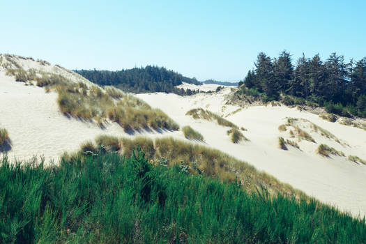 Dunes vs Forest