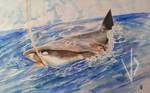 Shark-01 By VukoDlak