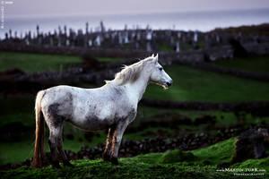 Ireland 03 by BlackdoG-MT