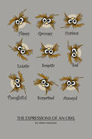 the expressions of an owl by emmcreations