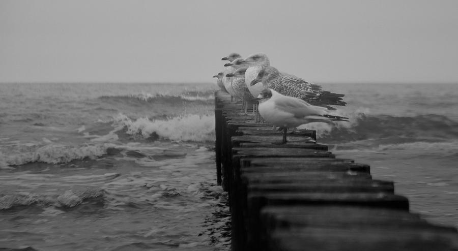 mew- sea by Lavemer