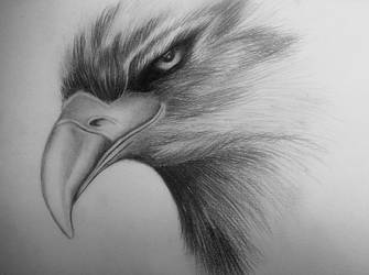 Eagle by sendee