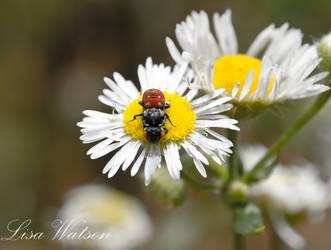 yum pollen by lissagayle