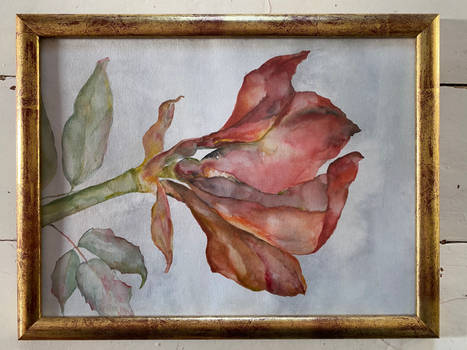 Amaryllis in watercolor