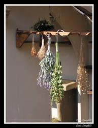 Les fleurs suspendus