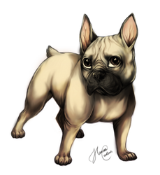 French Bulldog by Cederin