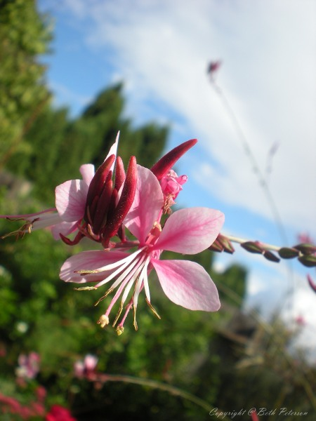 Pink Flower 2 by Piercingx