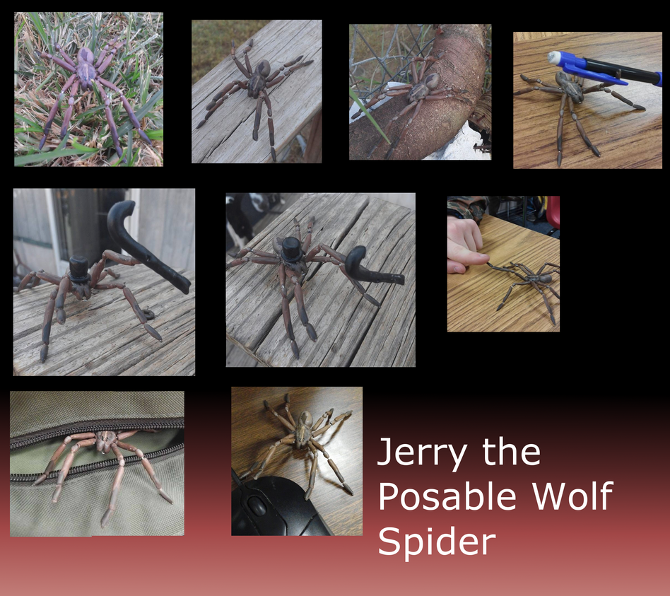 Jerry the Posable Wolf Spider! by Windicious