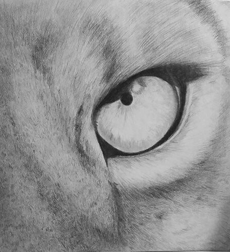Lion's eye by Windicious