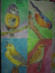 birds by DragonSlayerDraw
