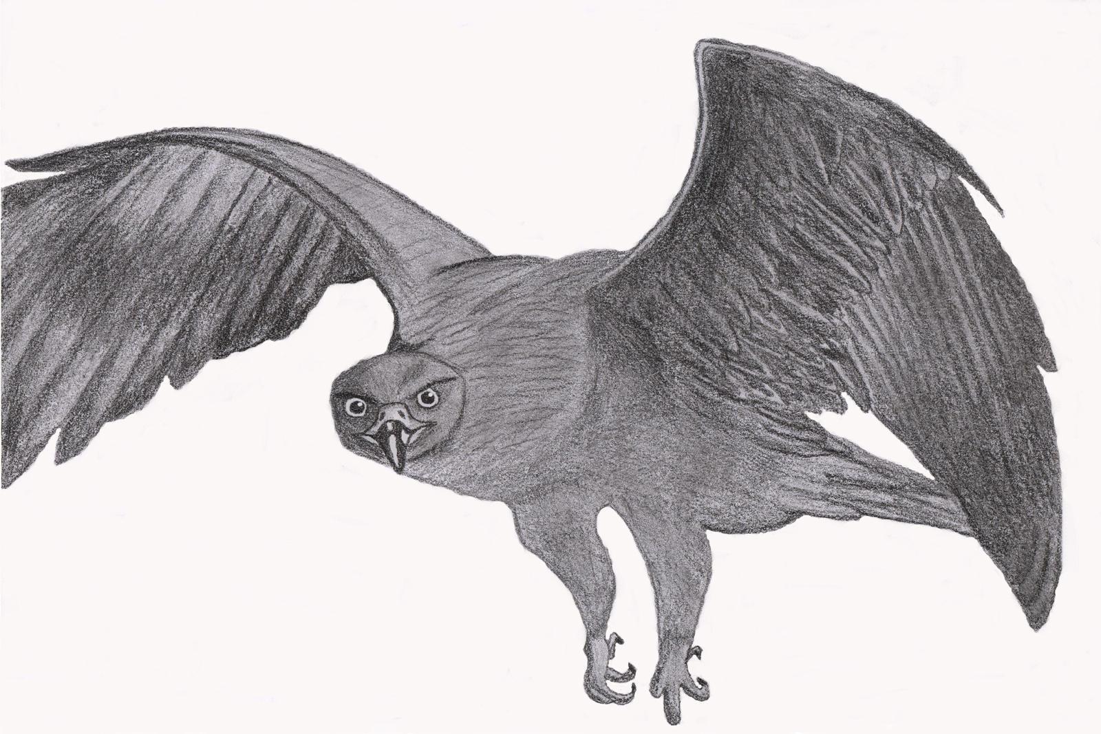 flying falcon drawing - 1095×730