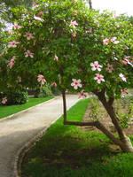garden by Adaae-stock