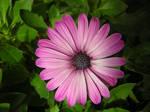 My flower
