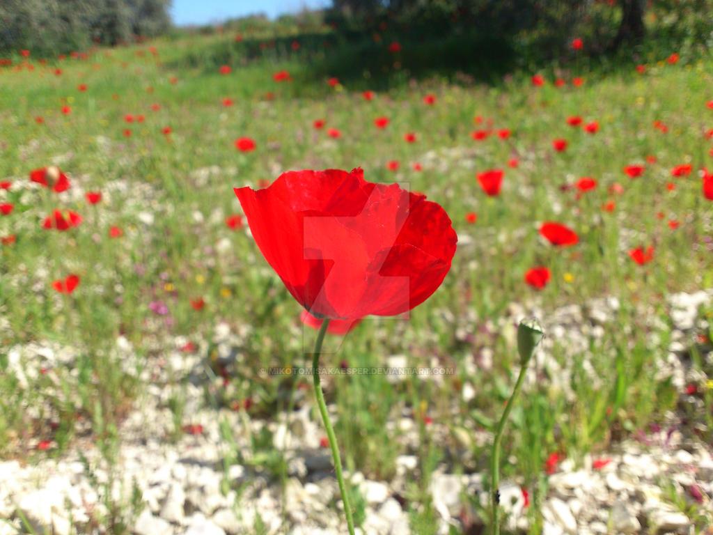 Red Flower by Mikotomisakaesper