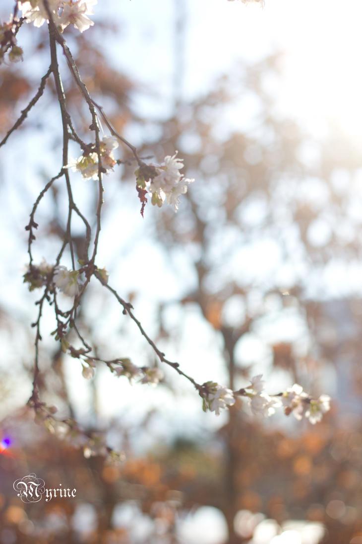 Blooming in December by Myrine86