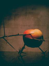 Thorns by Pandemoneus