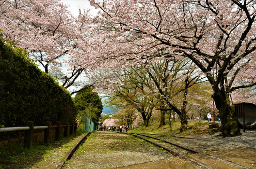 Ex-incline and cherry blossoms