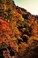 Fall in Nippara 2