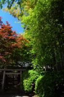 May by Furuhashi335