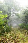 Misty path into Lake Mashu by Furuhashi335