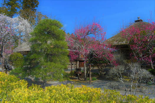 Early spring in Matsushima