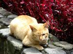 Lazy Cat by TheMilkyWayGalaxy