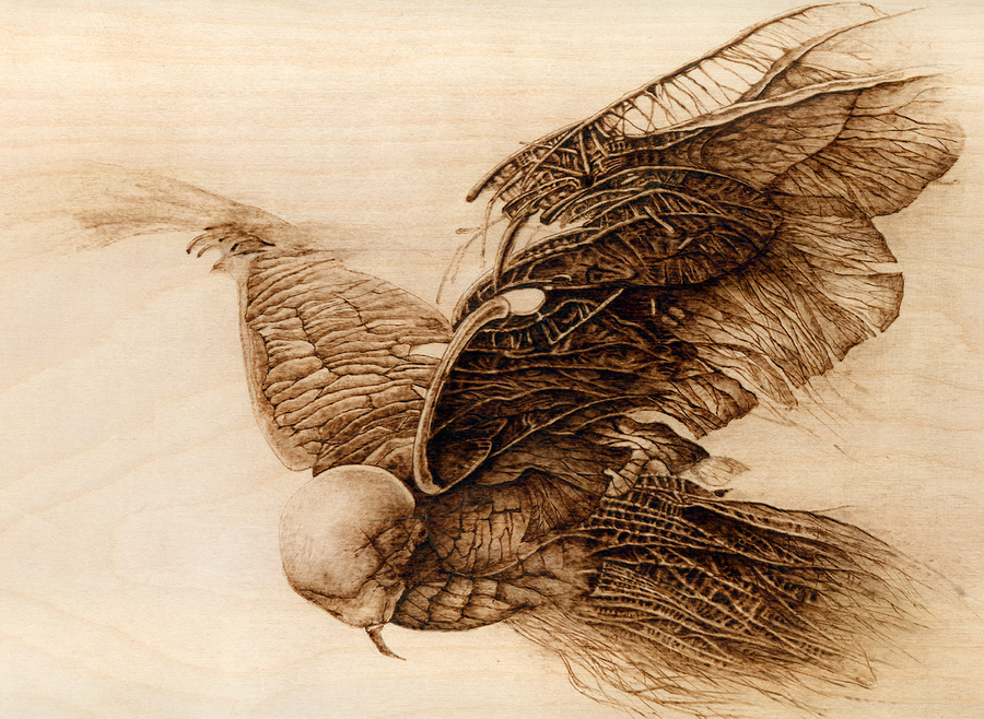 Woodburning - Bird by Eskarine