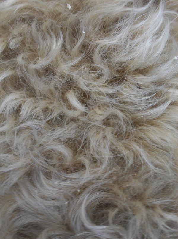 Fur Texture IIII by Slapfohrhasen