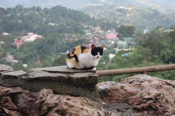 Cat on the top of a hill. by bydanikinori