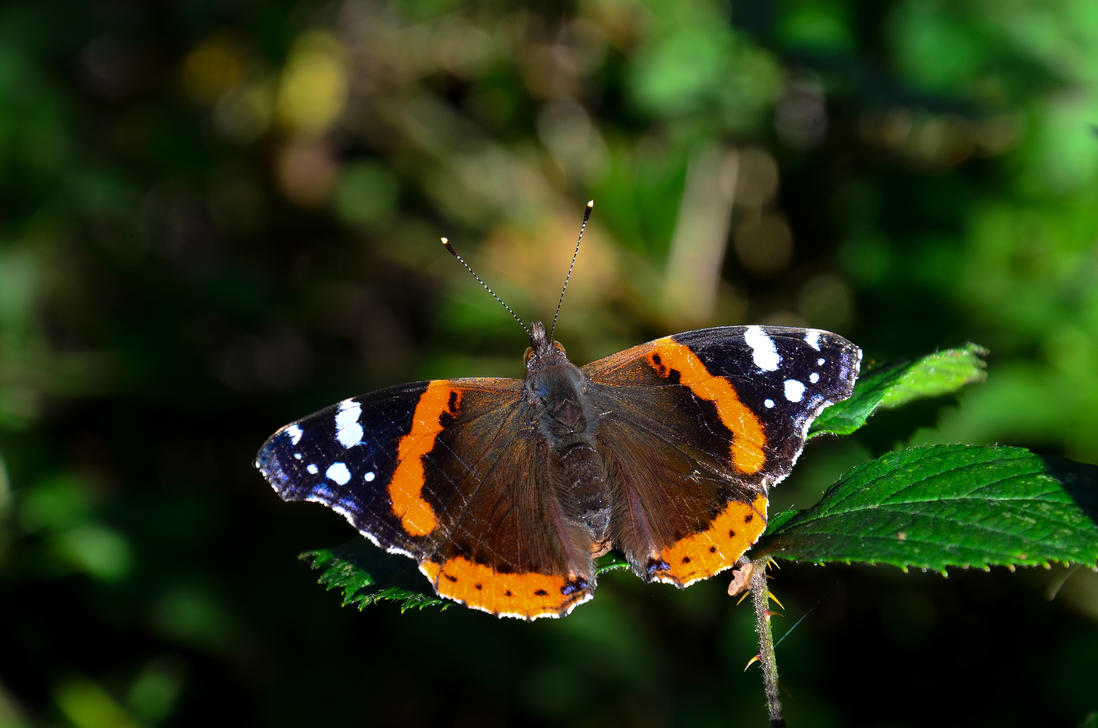 Butterfly by Johndoop