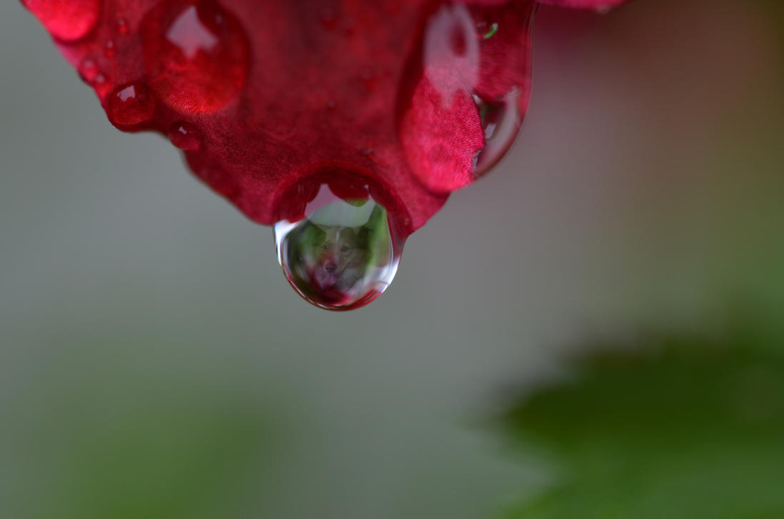 My dog Fellow in a drop. by Johndoop